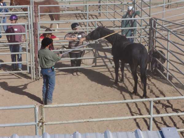 Blm horses sent back to stewart corrals for Negative show pool horse racing
