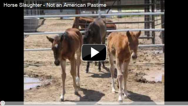LRTC Wild Horse Mentors Video Index